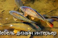 Дом для золотой рыбки